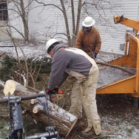 Anne Arundel County Reburn Tree Service Stump Removal MD