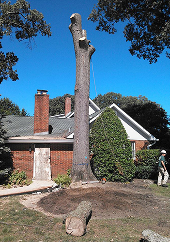 Tree Services Pasadena MD